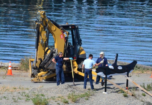 On Friday morning, Parks Department crews reinstalled the restored Orca sculpture to its traditional home in Brackett's Landing park.