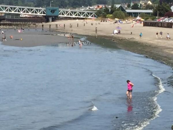 From Jennifer Benson, taken during Sunday's very low tide.
