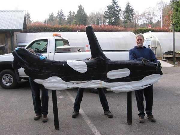 Parks employee Jesse Curran and two unidentified employees hold up the Brackett's Landing Orca in the Parks Department service yard, shortly after it fell over on March 11. The wood had become so rotten that the weight of the piece was enough to tear it off the supports. (Photo courtesy of the Edmonds Parks, Recreation and Cultural Services Department)