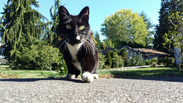 """This tuxedo cat showed up Monday night at 76th Avenue West and 220nd Street Southwest. He's described as """"very sociable,"""" """"super friendly, very talkative and doesn't feel like he's been missing long."""" No microchip found and no collar. If this is your cat, contact xxxxxxx."""