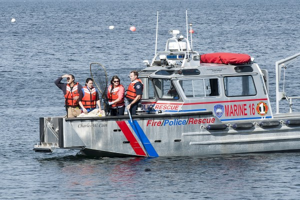 A rescue attempt by fire boat. The seal was just below the boat.