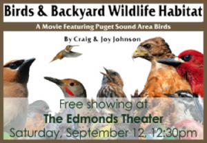 birds and backyard