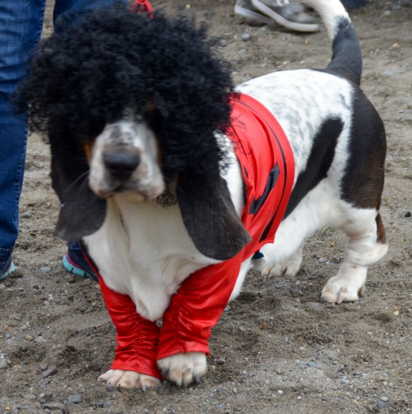 Funniest, first place: Atticus the Rocker Dog.