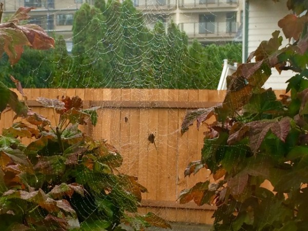 Maggie Fimia submitted this photo of two spider webs and two spiders outside her bedroom window, touched lightly by rain drops.