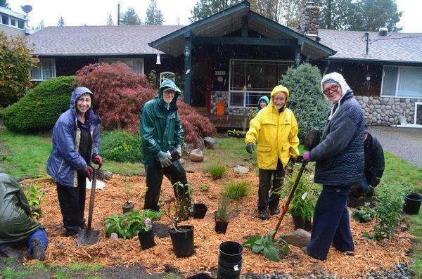 Neighbors and community volunteers pitch in to plant one of six new rain gardens on Sierra Drive in Edmonds' Seaview neighborhood.