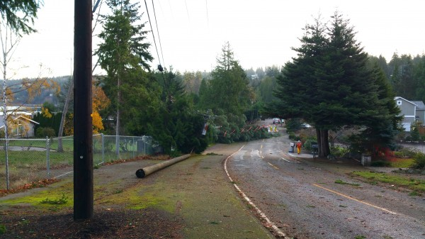 Taken Wednesday morning on Talbot Road: A tree took out a power line and pole during Tuesday's windstorm. (Photo by Neil Gilham)
