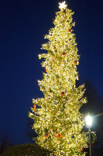 The tree in its fully-lit glory.