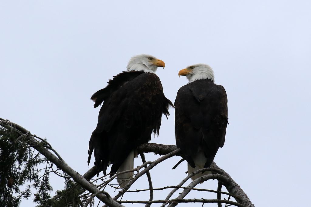 Eagle Care Home Elland Cqc