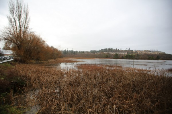 The Edmonds Marsh after a full day of rain, with the water reaching the boardwalk. (Photo by Bill Anderson)