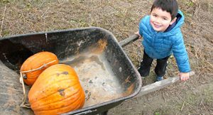 Fosters Produce and Cornmaze offers a pumpkin patch in the fall.