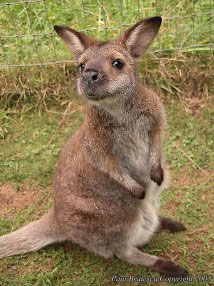Day Trip Discoveries Fascinating Critters At Outback Kangaroo Farm Reptile Zoo My Edmonds News