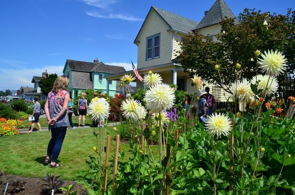 Dahlias Line The Border At Pauls Garden On Sunset Avenue One Of Stops Edmonds In Bloom Tour File Photo By Larry Vogel