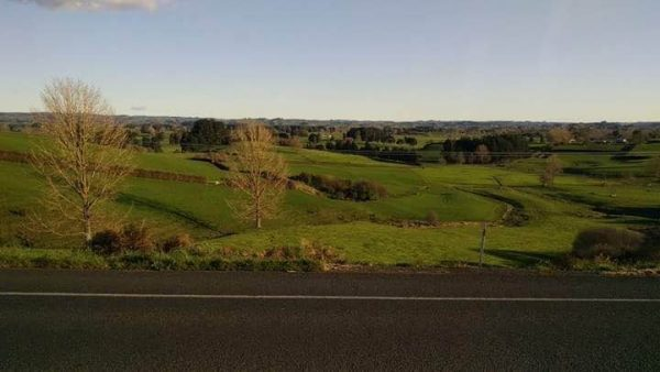 Most of the drive between Waitomo and Rotorua meanders through green, hilly farmland.