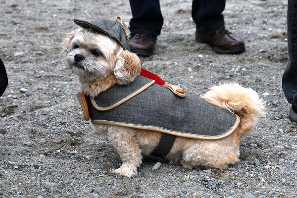 Good Dog Contest Gargen Gun