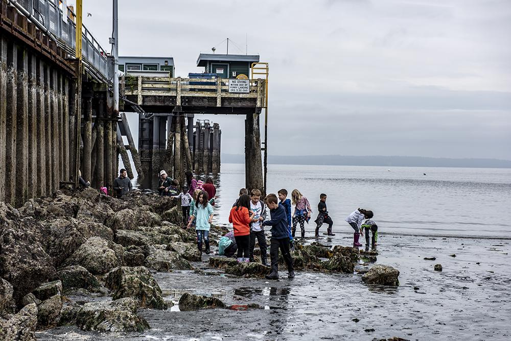 Scene in Edmonds: Low tide reveals sea treasures - My Edmonds News