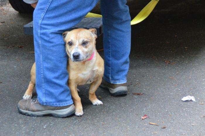 Paws Dog Rescue Pa