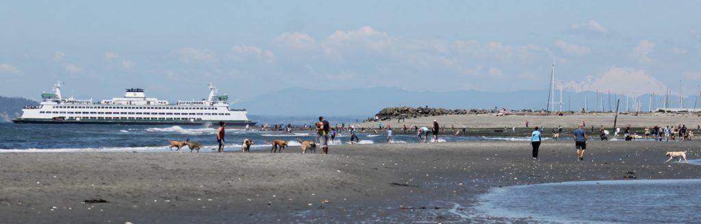 Scene in Edmonds: Low tide at the dog beach - My Edmonds News
