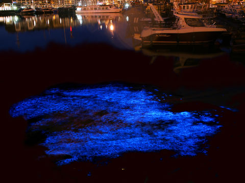 Scene In Edmonds These Blooming Plankton Glow In The Dark My