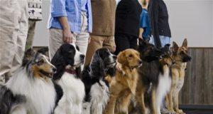 Dog Training Nelson