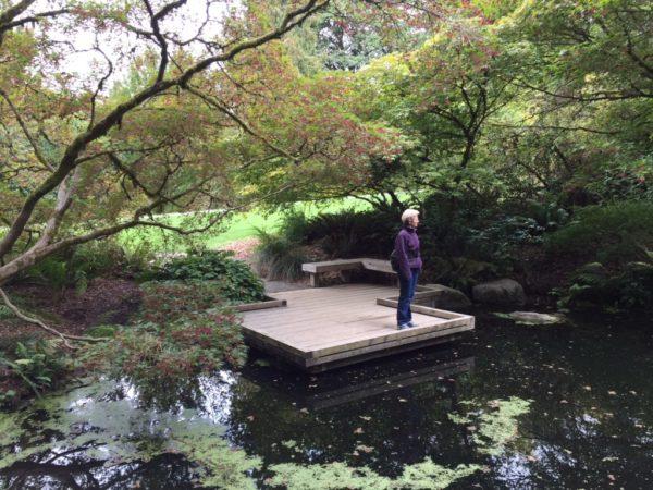 The Woodland Garden pond