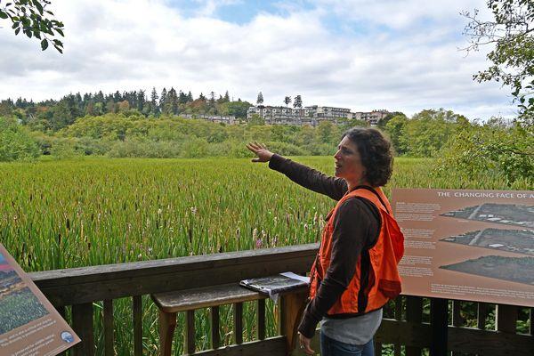 Marsh observation point