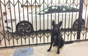 K9 Hobbs with white sedan