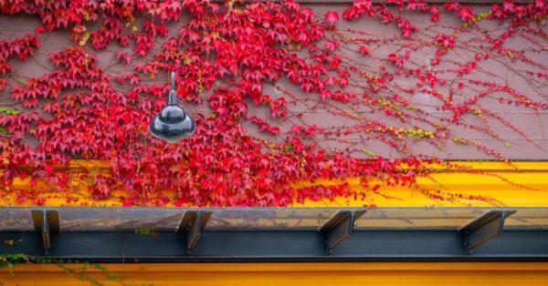 Fall in Edmonds