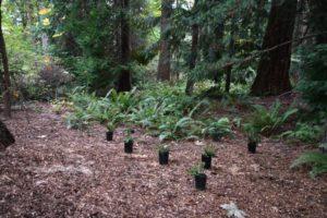Ferns in Hutt Park