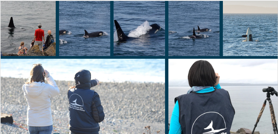 Saving Our Orcas presentation at Edmonds Demo Garden March 31