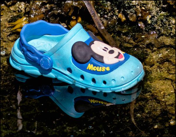 Scene in Edmonds: Croc in the water - My Edmonds News